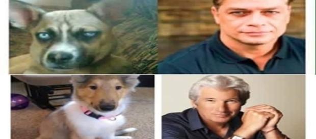 Cachorros que se parecem com artistas famosos