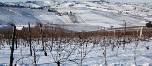 Distesa di vigne innevate nel centro Italia
