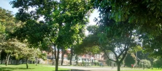 Las carreras verdes han contribuido a la siembra de miles de árboles en el mundo.