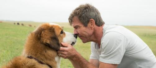 'A Dog's Purpose' releasing Jan 27, (Webnews.com)