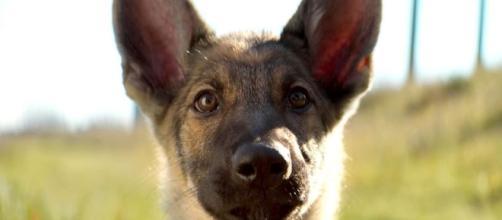 PETA demands boycott of A Dog's Purpose over 'harsh' treatment of ... - digitalspy.com