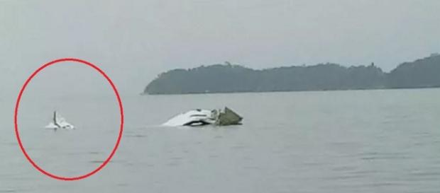 Avião cai no mar do Rio de Janeiro - Google