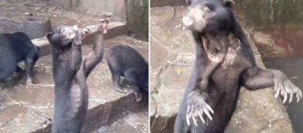Nas imagens chocantes é possível ver as condições precárias em que viviam os animais.