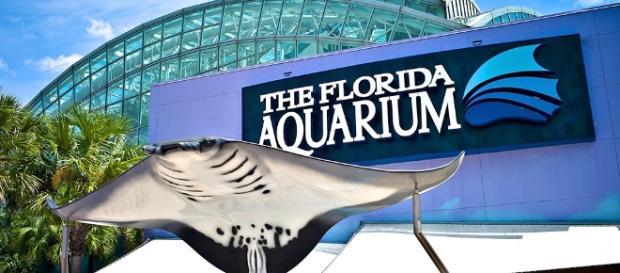 The Florida Aquarium - Clio - theclio.com