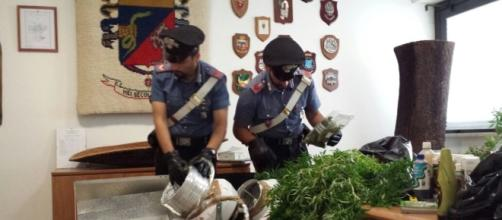 Sequestro di piante di marijuana, foto di repertorio