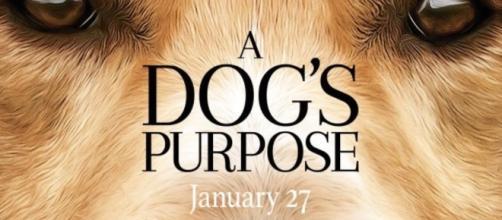 Not so happy development for Amblin's 'A Dog's Purpose' / Photo from 'EventBrite' - eventbrite.com
