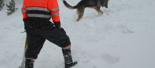 Soccorso alpino in azione. Il cane alla ricerca di presenze.