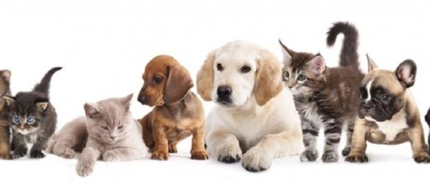 Le detrazioni per chi ha animali in casa: modello 730 e TARI