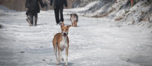 A chi vanno gli animali domestici in caso di divorzio? L'Alaska 'rivoluziona' il diritto di famiglia.