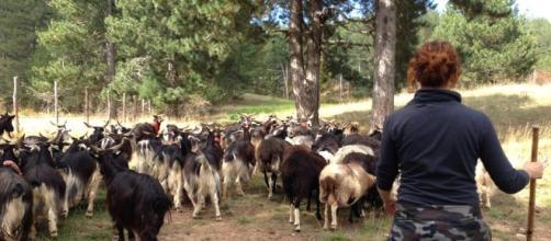 Pastoralismo donna - ruralpini.it