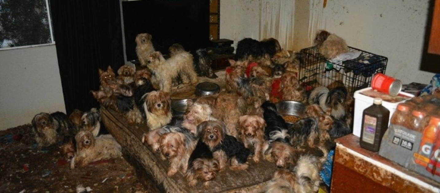 Southern california hoarding case expands to 123 dogs for Southern living login