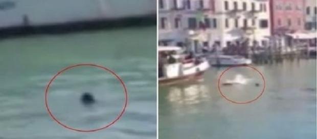 Passageiros de barcos não pularam para salvá-lo