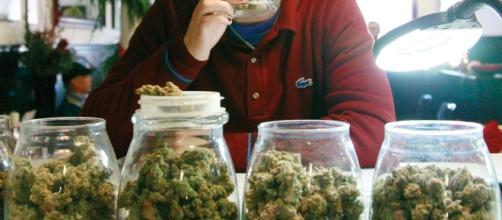 Weed Dispensary – SBDC - sbdc-evanston.org