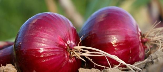 oignon pour traiter toux, fièvre et otite
