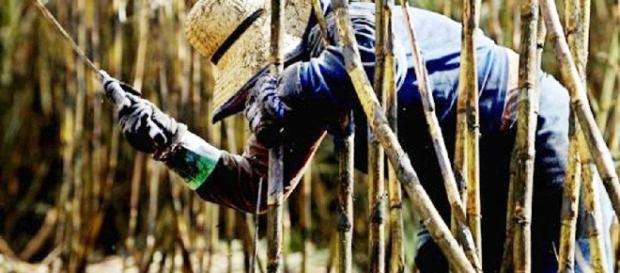 Sepa, ¿Porqué Trujillo le encarga azúcar a Brasil innecesariamente ... - blogspot.com