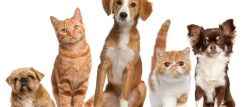 Who gets the pets when a couple divorces? - Photo: Blasting News Library - gogreen.org