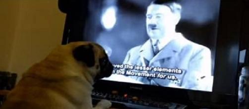 Homem ensina cachorro a fazer a saudação nazista