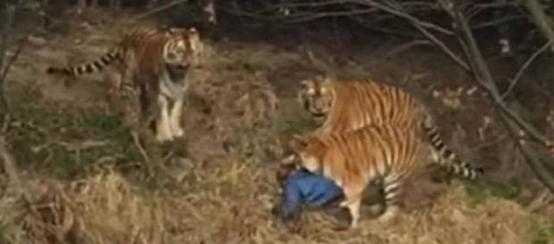 Homem é atacado em zoológico na China