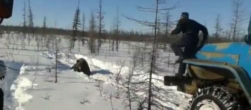 A bear about to get run over. Yakutia Online (YouTube screencap)