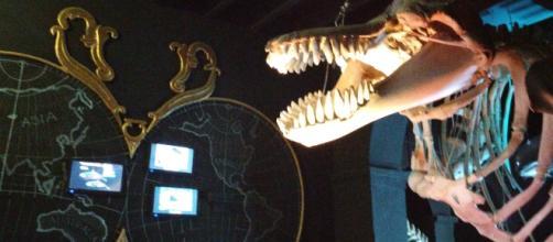 Esqueletos y representaciones gráficas visten la oscuridad de las salas
