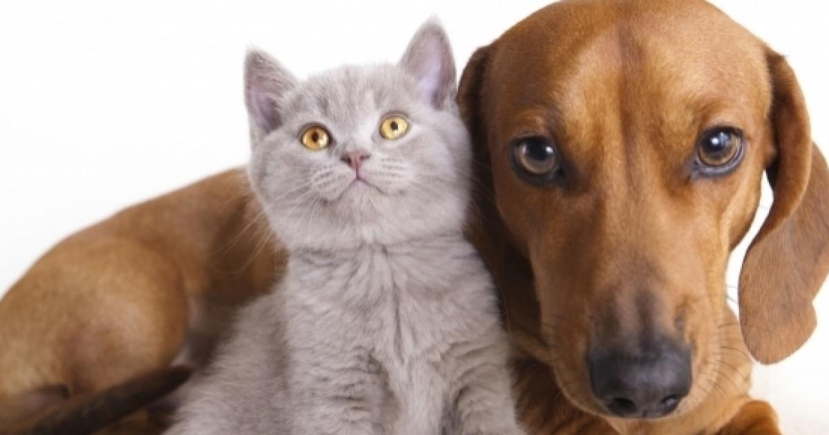 I Nostri Amici Gatti Intelligenti Come I Cani E Con Una Coscienza