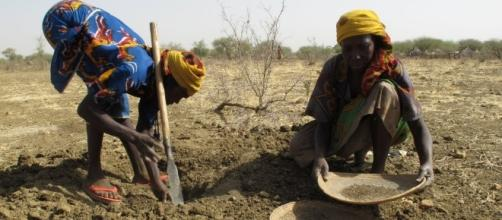 carestía | misosoafrica - wordpress.com