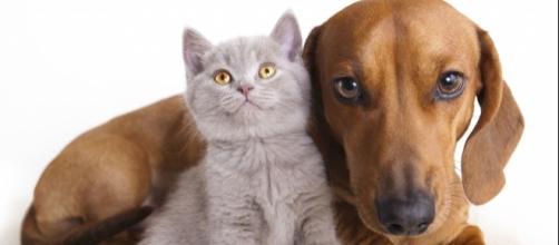 Il gatto meno intelligente del cane? Questo è da vedere!