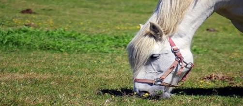 PACMA defiende los derechos de los animales. Public Domain.