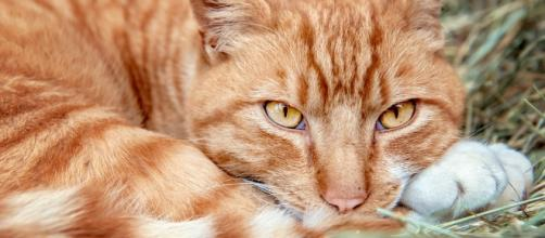 Tips on Convincing Feral Cats to Take Shelter   The Animal Rescue ... - theanimalrescuesite.com