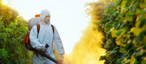 Un terzo dei prodotti agricoli in Italia contiene pesticidi