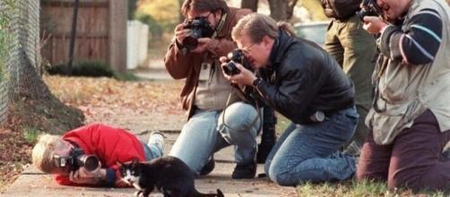 Animais são fotografados pelos seus donos e viram celebridades na web