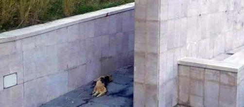 La foto del gatto ritrovato imbottito di petardi a Tortora