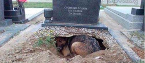 Todos acreditavam que ela queria ser sepultada com o dono.
