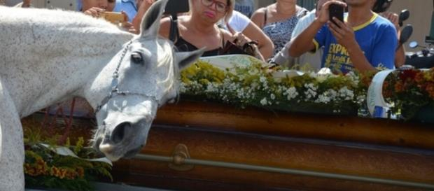 Cavalo se despede do dono - Google