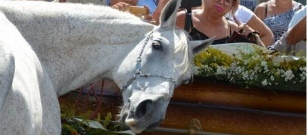 Cavalo se despede do dono morto em acidente com gesto surpreendente
