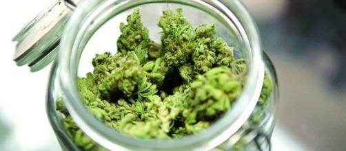 Cannabis terapeutica, in vendita nelle farmacie, sotto controllo statale