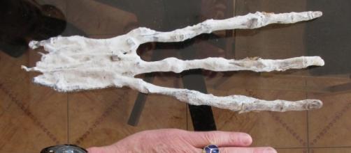 La mano, di natura sconosciuta rinvenuta in Perù insieme ad teschio di forma allungata orizzontalmente.