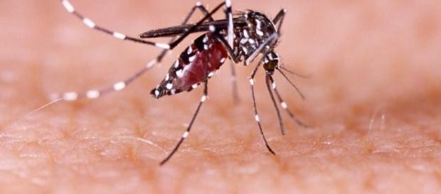 Casos de febre amarela na região põe Saúde em alerta