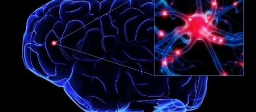 Cervello di cui la parte evidenziata è il corpo cellulare del neurone