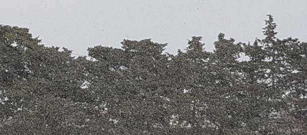 Ancora neve sulla penisola salentina.