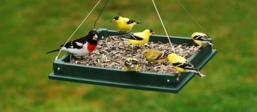 Anyone who enjoys feeding birds will enjoy artist Chris Bleicher's BirdCam project. / Photo via Blasting News and ebay.com