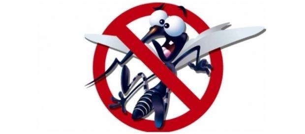 O combate ao mosquito é uma ação que precisa do apoio e fiscalização de toda comunidade