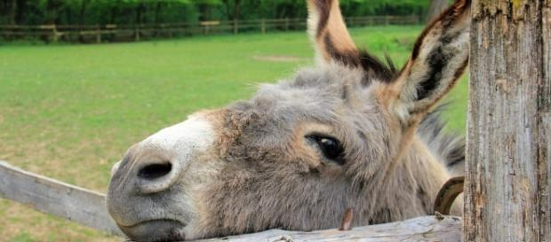 In Germany, a donkey bite an orange 'McLaren' and the court ordered to pay compensation to the car owner. (Image credit: Photos via Pixabay}