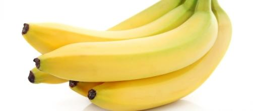The Cavendish cultivar makes up 95 percent of all global banana exports. [Image via Pixabay]