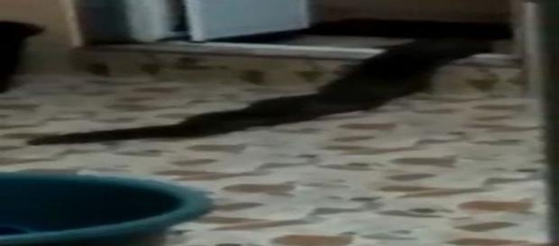 Monstrengo gigante rasteja pela casa de uma família na Malásia (Zul Hanif Anip)