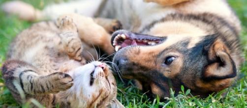 Come far convivere insieme cane e gatto - Non sprecare - nonsprecare.it