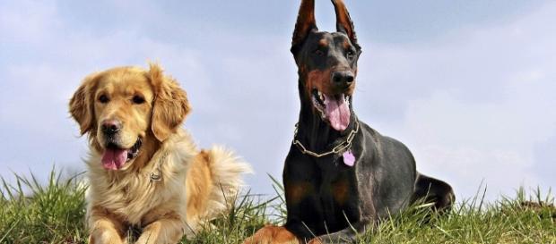 Los perros tienen alma y guías espirituales? - eperros.com