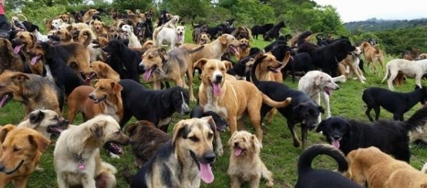 Um santuário que abriga cães que foram abandonados (foto: wordpress.com)