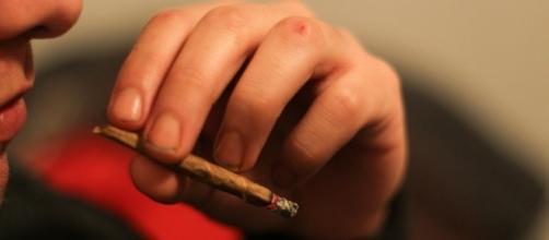 Marijuana sales continue to skyrocket in Colorado - martinalonso4895/Flickr.com CC
