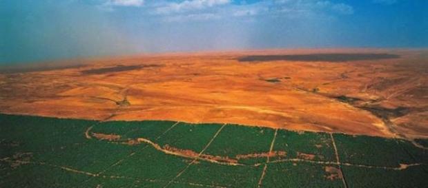 Muralha de árvores erguida para barrar o deserto